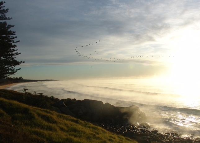 Flock of seabirds fly out of the sunrise on a foggy ocean day
