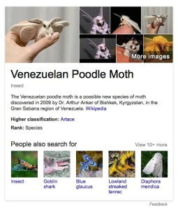 poodlemoth_googleresults