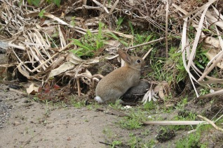 rabbit_small_img_4420
