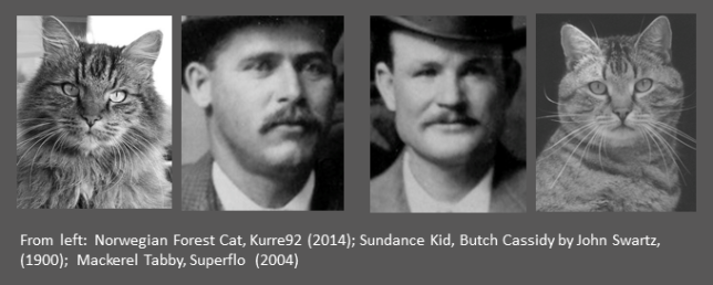 Cat, Sundance Kid, Butch Cassidy, Cat